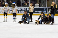 Dachshund_Race_Heat_2-2210
