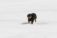 Dachshund_Race_Heat_1-2186