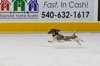 Dachshund_Race_Heat_1-2178