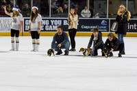 Dachshund_Race_Heat_2-2209