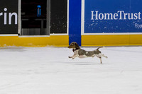 Dachshund_Race_Heat_1-2175