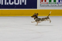 Dachshund_Race_Heat_1-2179