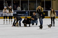 Dachshund_Race_Heat_1-2171